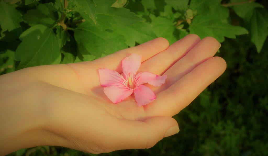Eine Hand hält eine Blume, es signalisiert, dass die Trauer etwas schönes, heilsames sein kann und dass es Gründe dafür gibt, die Trauer zuzulassen.