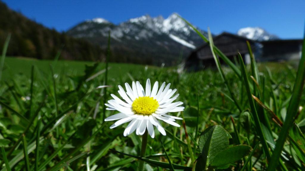 Eine Blume auf einer Wiese vor einem Berg. Trauer Hospizarbeit Bewegung